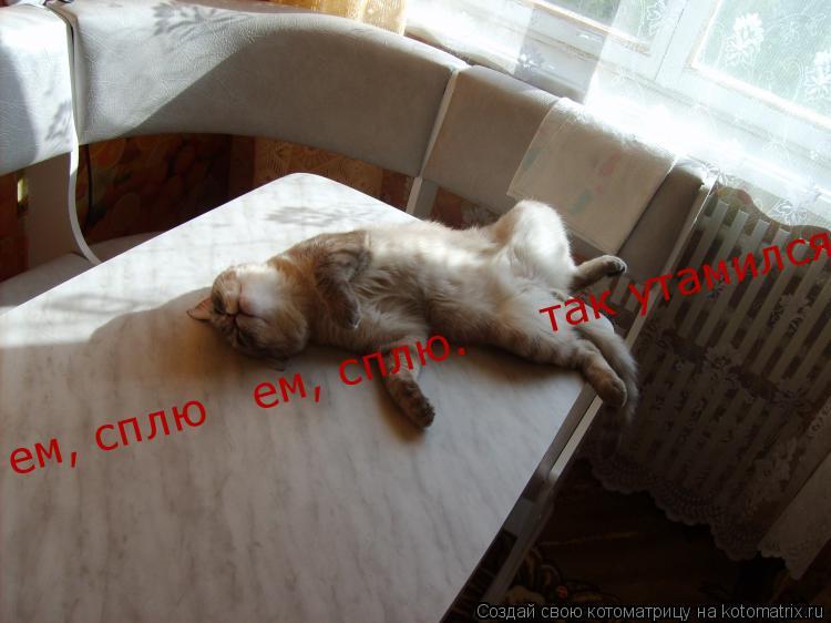 Котоматрица: ем, сплю   ем, сплю.     так утамился!