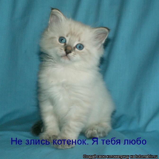 Котоматрица: Не злись котенок. Я тебя любо