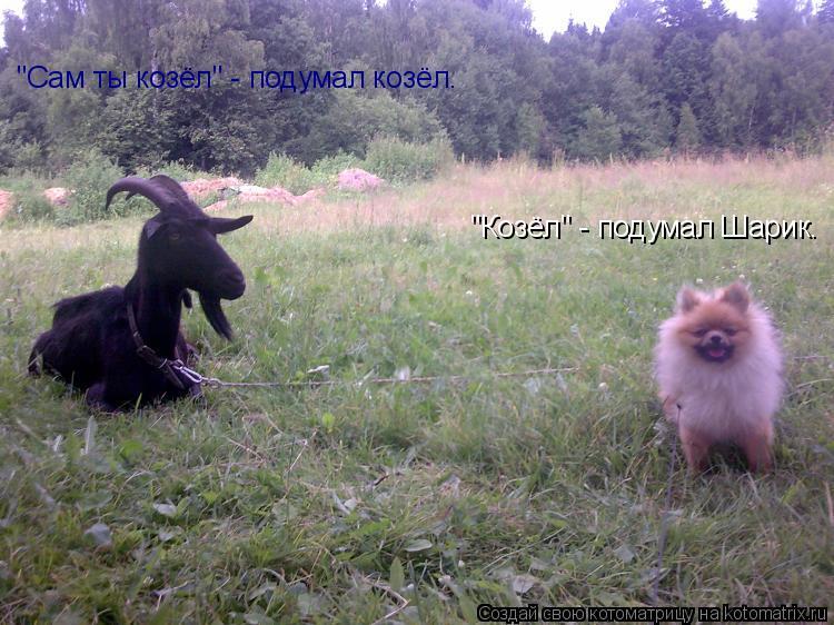 "Котоматрица: ""Козёл"" - подумал Шарик. ""Сам ты козёл"" - подумал козёл."