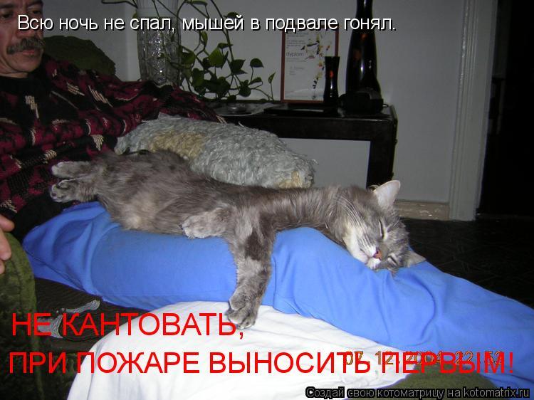 Котоматрица: Всю ночь не спал, мышей в подвале гонял. НЕ КАНТОВАТЬ,  ПРИ ПОЖАРЕ ВЫНОСИТЬ ПЕРВЫМ!