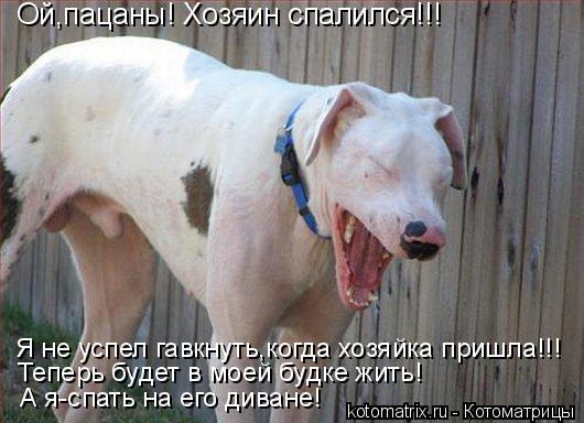 Котоматрица: Ой,пацаны! Хозяин спалился!!! Я не успел гавкнуть,когда хозяйка пришла!!! Теперь будет в моей будке жить! А я-спать на его диване!