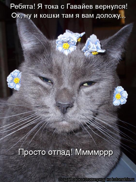 Котоматрица: Ребята! Я тока с Гавайев вернулся! Ох, ну и кошки там я вам доложу... Просто отпад! Ммммррр