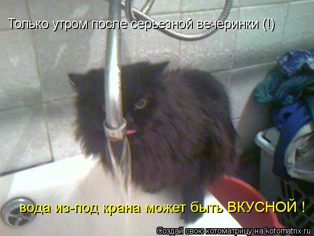 Котоматрица: Только утром после серьезной вечеринки (!) вода из-под крана может быть ВКУСНОЙ !