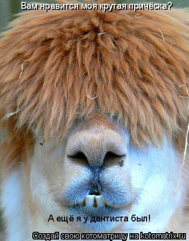 Котоматрица: Вам нравится моя крутая причёска? А ещё я у дантиста был!