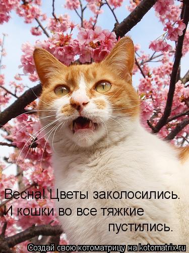 Котоматрица: Весна! Цветы заколосились. И кошки во все тяжкие  пустились.