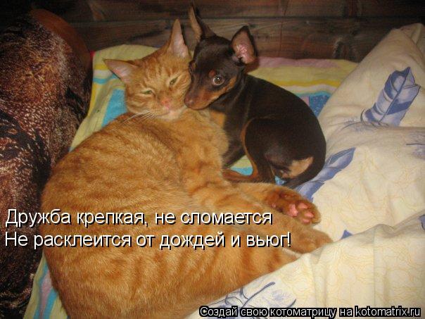 Котоматрица: Дружба крепкая, не сломается Не расклеится от дождей и вьюг!