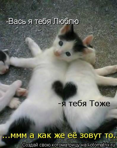 Котоматрица: -Вась я тебя Люблю  -я тебя Тоже ...ммм а как же её зовут то....