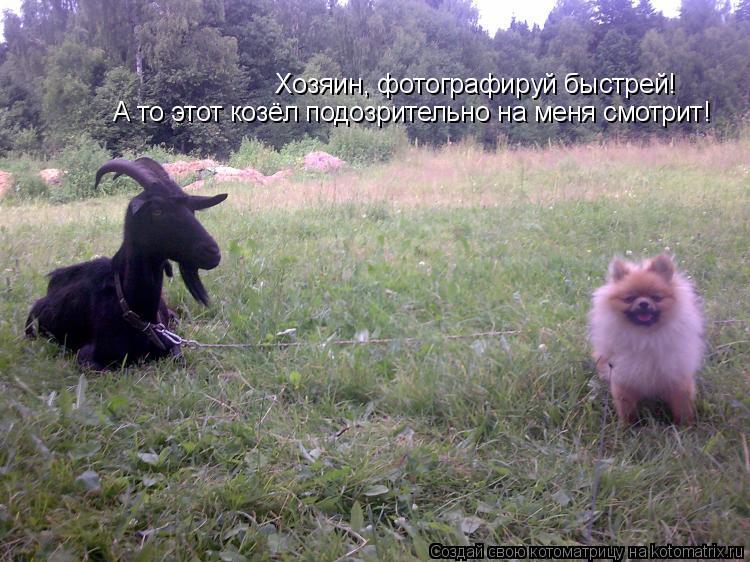 Котоматрица: Хозяин, фотографируй быстрей! А то этот козёл подозрительно на меня смотрит!