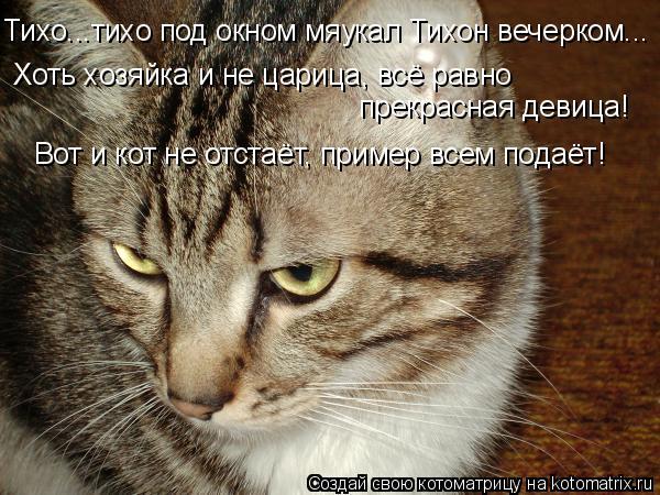 Котоматрица: Тихо...тихо под окном мяукал Тихон вечерком... Хоть хозяйка и не царица, всё равно прекрасная девица! Вот и кот не отстаёт, пример всем подаёт!