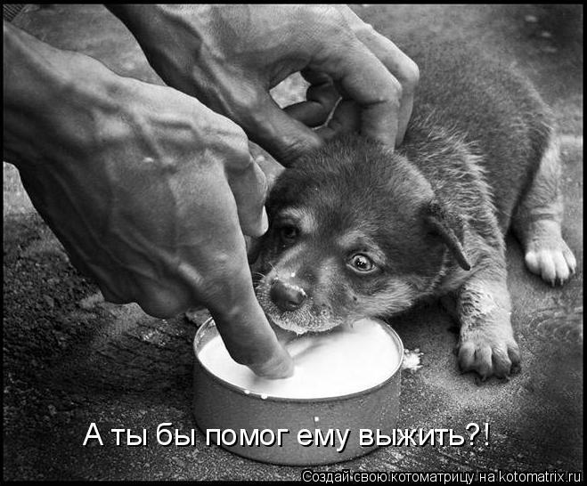 Котоматрица: А ты бы помог ему выжить?!