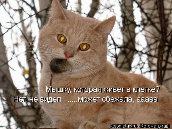Котоматрица: Мышку, которая живет в клетке?  Нет, не видел........может сбежала, ааааа