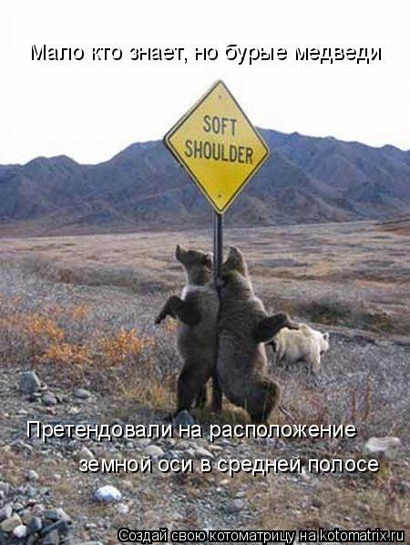 Котоматрица: Мало кто знает, но бурые медведи Претендовали на расположение  земной оси в средней полосе