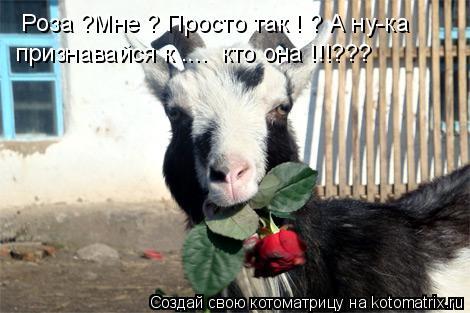 Котоматрица: Роза ?Мне ? Просто так ! ? А ну-ка  признавайся к ....  кто она !!!???