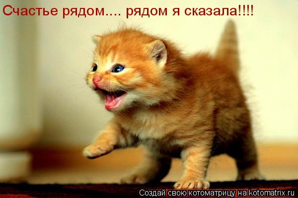 Котоматрица: Счастье рядом.... рядом я сказала!!!!