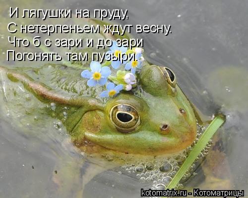 Котоматрица: И лягушки на пруду, С нетерпеньем ждут весну. Что б с зари и до зари  Погонять там пузыри.