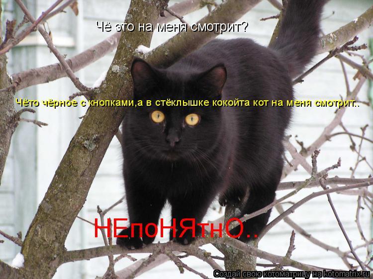 Котоматрица: Чё это на меня смотрит? Чёто чёрное с кнопками,а в стёклышке кокойта кот на меня смотрит.. НЕпоНЯтнО°•