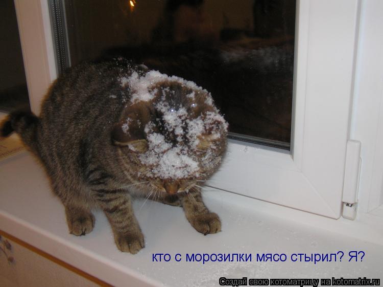 Котоматрица: кто с морозилки мясо стырил? Я?