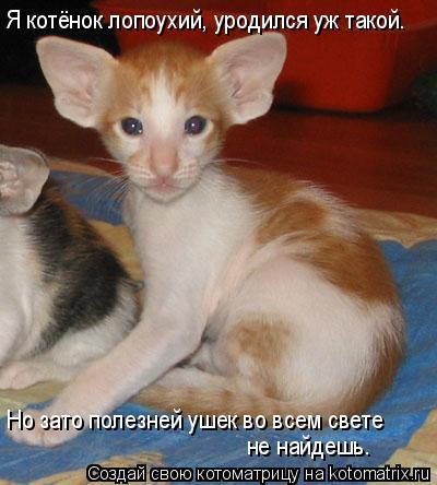 Котоматрица: Я котёнок лопоухий, уродился уж такой. Но зато полезней ушек во всем свете  не найдешь.