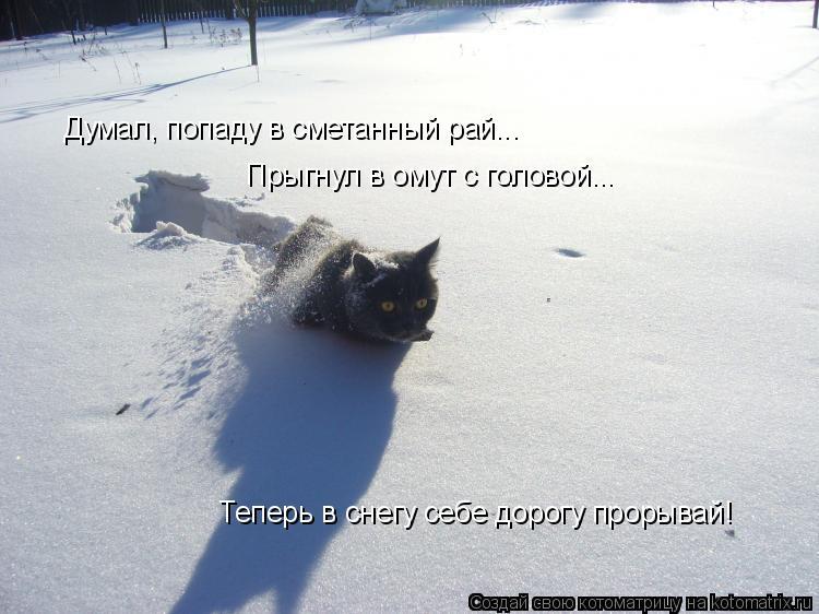 Котоматрица: Думал, попаду в сметанный рай... Прыгнул в омут с головой... Теперь в снегу себе дорогу прорывай!