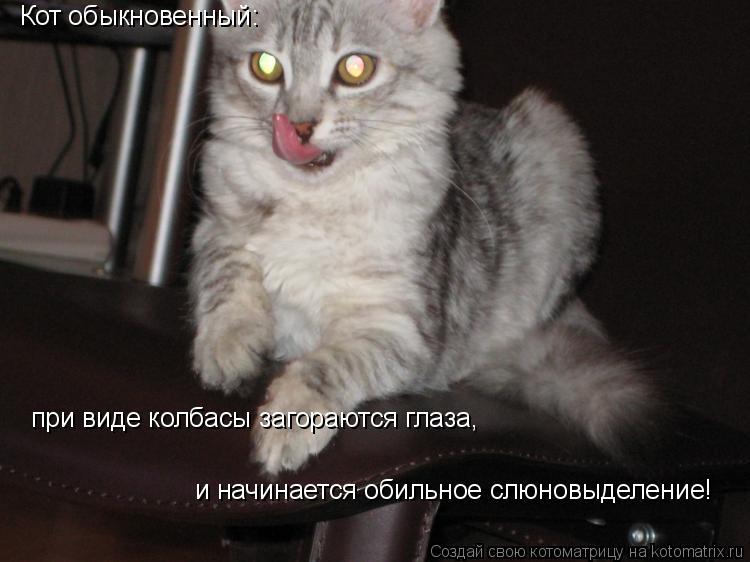 Котоматрица: Кот обыкновенный: при виде колбасы загораются глаза, и начинается обильное слюновыделение!