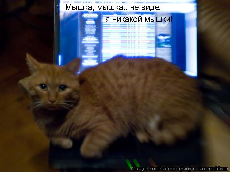 Котоматрица: Мышка, мышка.. не видел  я никакой мышки!