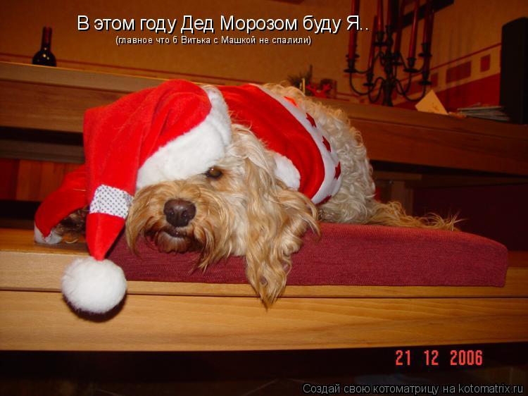 Котоматрица: В этом году Дед Морозом буду Я.. (главное что б Витька с Машкой не спалили)