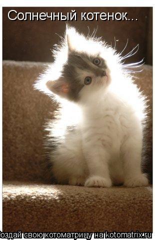 Котоматрица: Солнечный котенок...