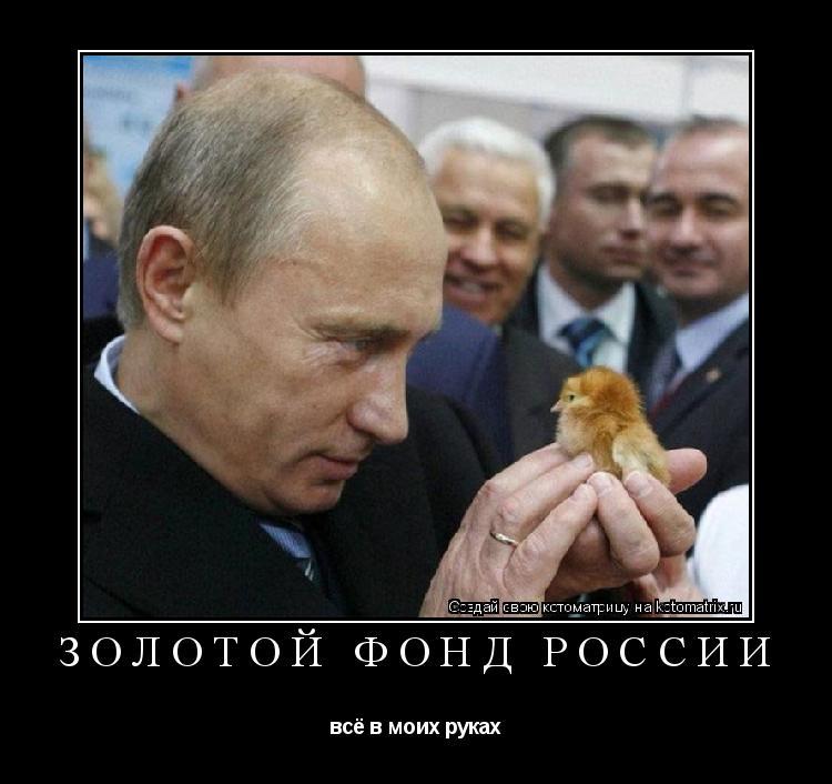 Котоматрица: золотой фонд России всё в моих руках