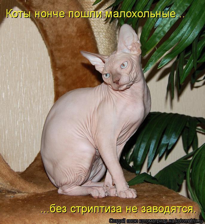 Котоматрица: Коты нонче пошли малохольные... ...без стриптиза не заводятся.