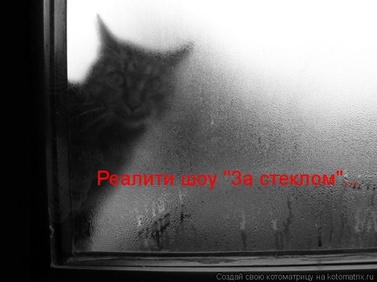 """Котоматрица: Реалити шоу """"За стеклом""""..."""
