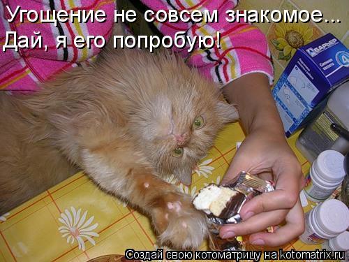 Котоматрица: Угощение не совсем знакомое... Дай, я его попробую!