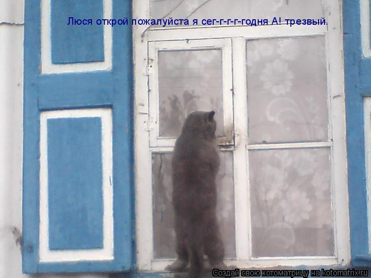 Котоматрица: Люся открой пожалуйста я сег-г-г-г-годня А! трезвый.