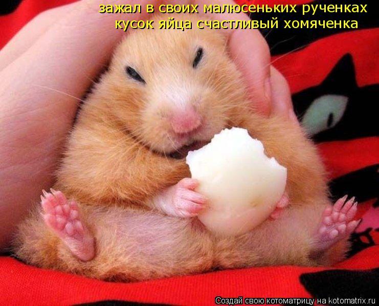 Котоматрица: зажал в своих малюсеньких рученках кусок яйца счастливый хомяченка