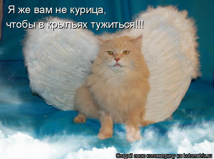 Котоматрица: Я же вам не курица, чтобы в крыльях тужиться!!!