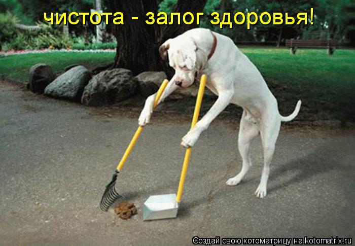 Котоматрица: чистота - залог здоровья! чистота - залог здоровья!
