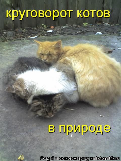 Котоматрица: круговорот котов в природе