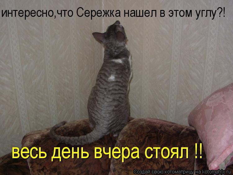 Котоматрица: весь день вчера стоял !! интересно,что Сережка нашел в этом углу?!