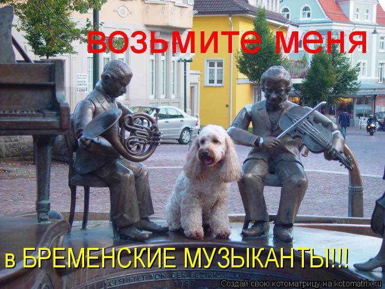 Котоматрица: возьмите меня  в БРЕМЕНСКИЕ МУЗЫКАНТЫ!!!