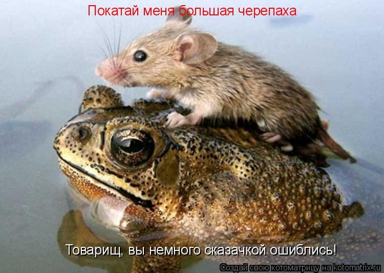 Котоматрица: Покатай меня большая черепаха Товарищ, вы немного сказачкой ошиблись!