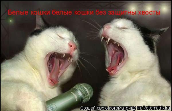 Котоматрица: Белые кошки белые кошки без защитны хвосты