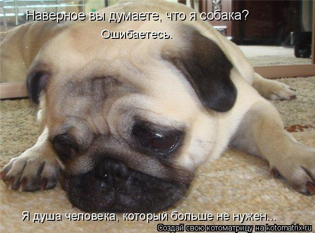 Котоматрица: Наверное вы думаете, что я собака? Ошибаетесь. Я душа человека, который больше не нужен...
