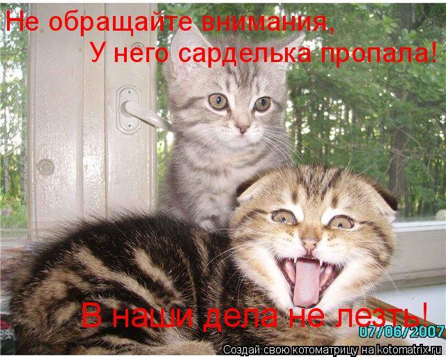 Котоматрица: В наши дела не лезть! Не обращайте внимания, У него сарделька пропала!