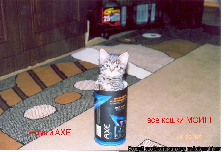 Котоматрица: Новый AXE все кошки МОИ!!!