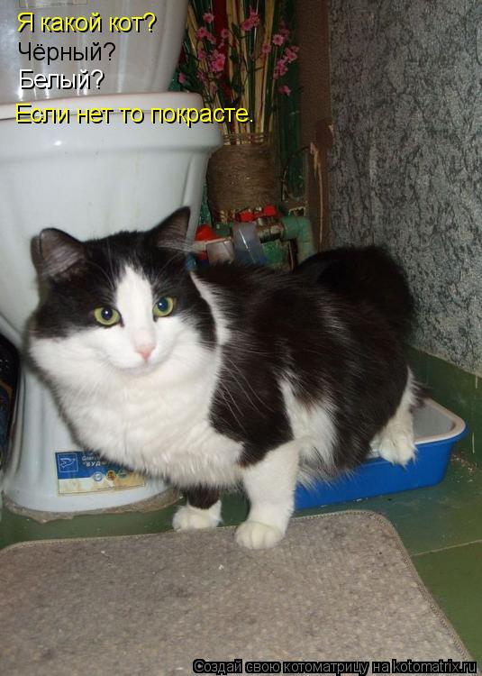 Котоматрица: Я какой кот? Чёрный? Белый? Если нет то покрасте.