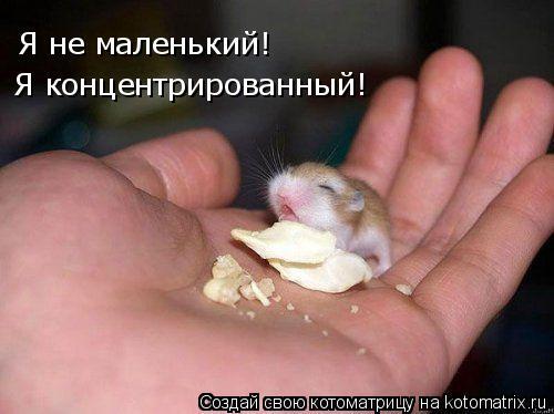 Котоматрица: Я не маленький!  Я концентрированный!