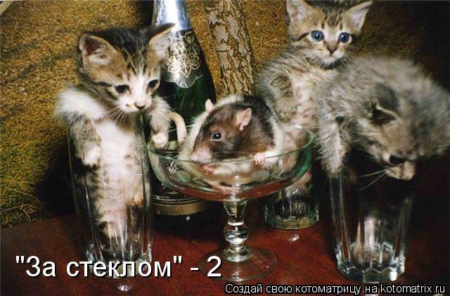 """Котоматрица: """"За стеклом"""" - 2"""