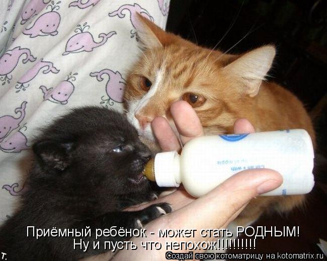 Котоматрица: Приёмный ребёнок - может стать РОДНЫМ! Ну и пусть что непохож!!!!!!!!!!