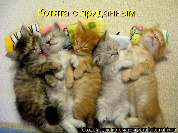 Котоматрица: Котята с приданным...