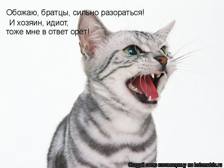 Котоматрица: Обожаю, братцы, сильно разораться! И хозяин, идиот, тоже мне в ответ орёт!