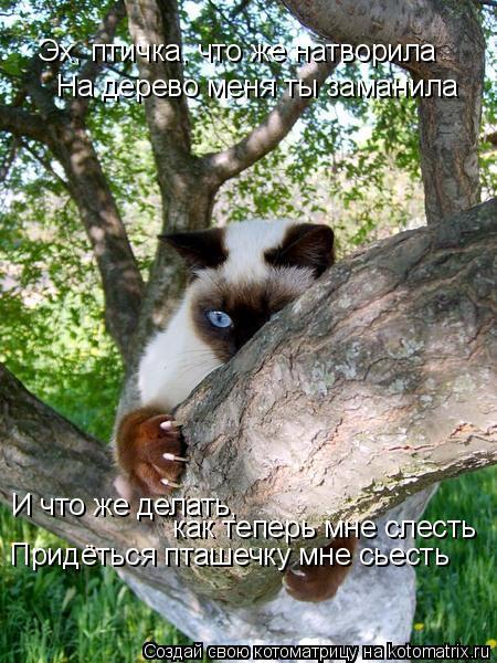 Котоматрица: Эх, птичка, что же натворила На дерево меня ты заманила И что же делать, как теперь мне слесть Придёться пташечку мне сьесть